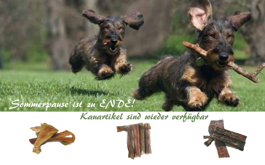 Reico Kauartikel für Hunde sind wieder im Onlineshop erhältlich.