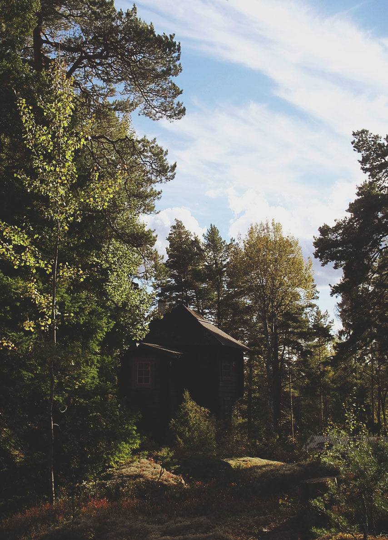 cabane datcha bigousteppes suède bois forêt