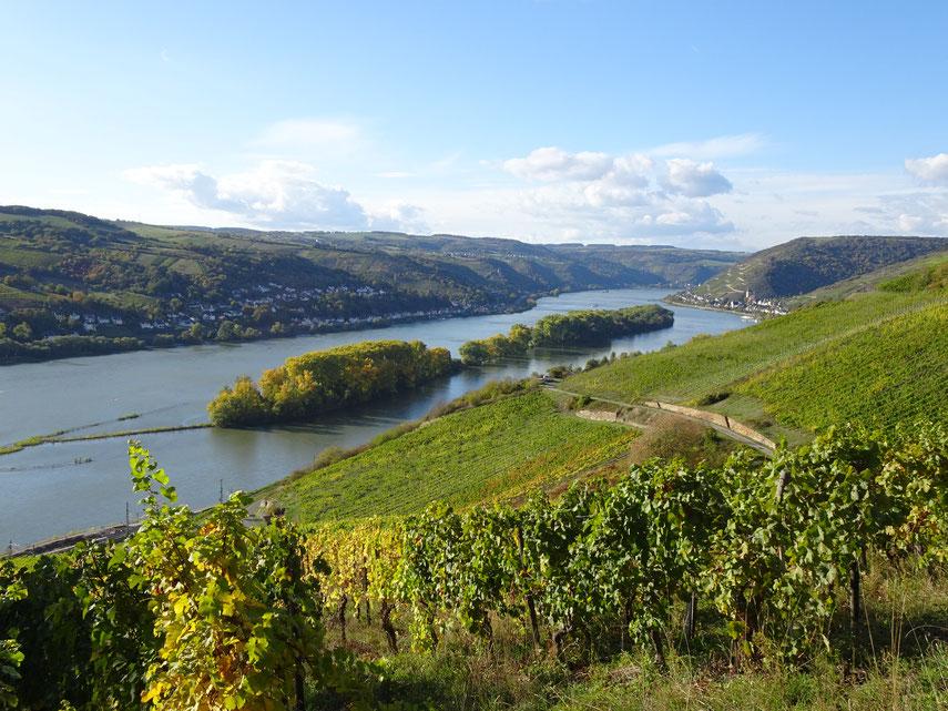 Balade entre Rhin et vignobles...