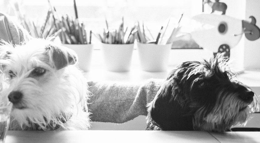 Was gibt's zu essen? Nicht alle Leckereien sind für Hunde geeignet. Foto: Steffi Atze ♥