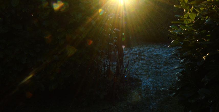 ©www.lichtwesenfotografie.com