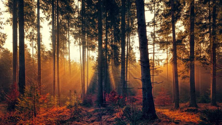 Sonnenstrahlen im herbstlichen Wald