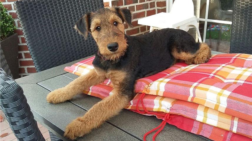 Arielle auf dem Gartentisch ;-)