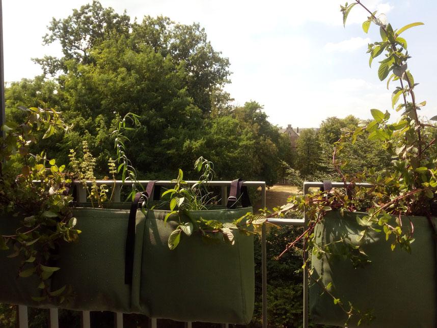 Balcon Aménagement paysager - Marguerite Ferry - Urban Garden Designer - Brussels - Blog Jardin Belgique