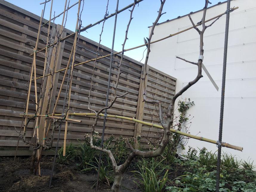 Plantation Fruitiers Automne - Marguerite Ferry - Urban Garden Designer - Bruxelles - Blog Jardin Belgique