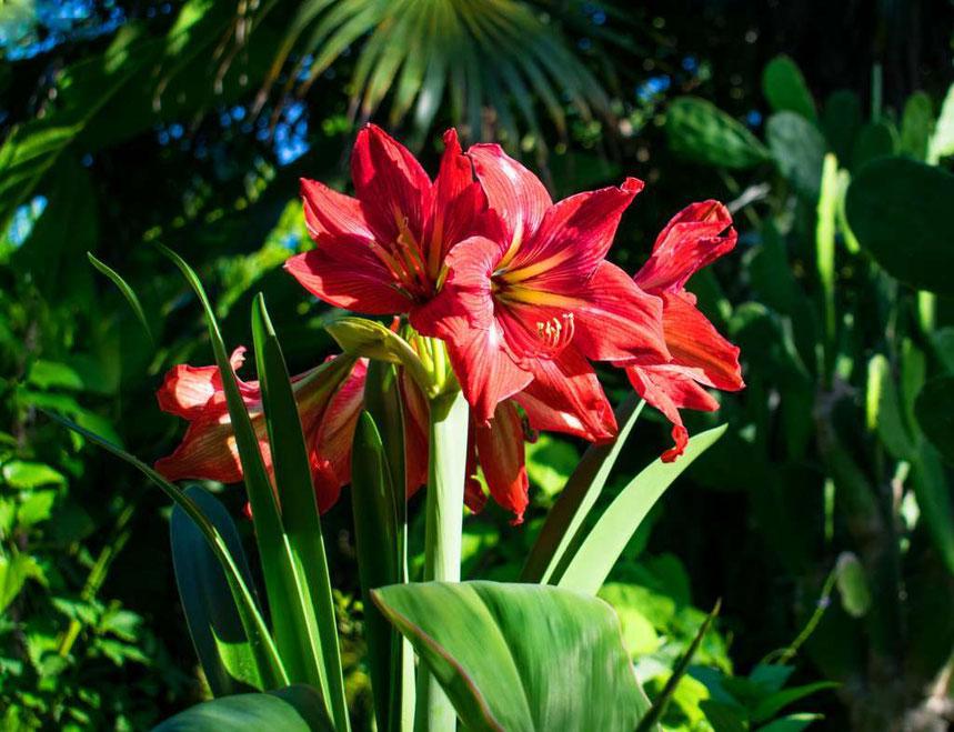 Bromeliads in Barney's Flower&Hummingbird Garden Jamaica