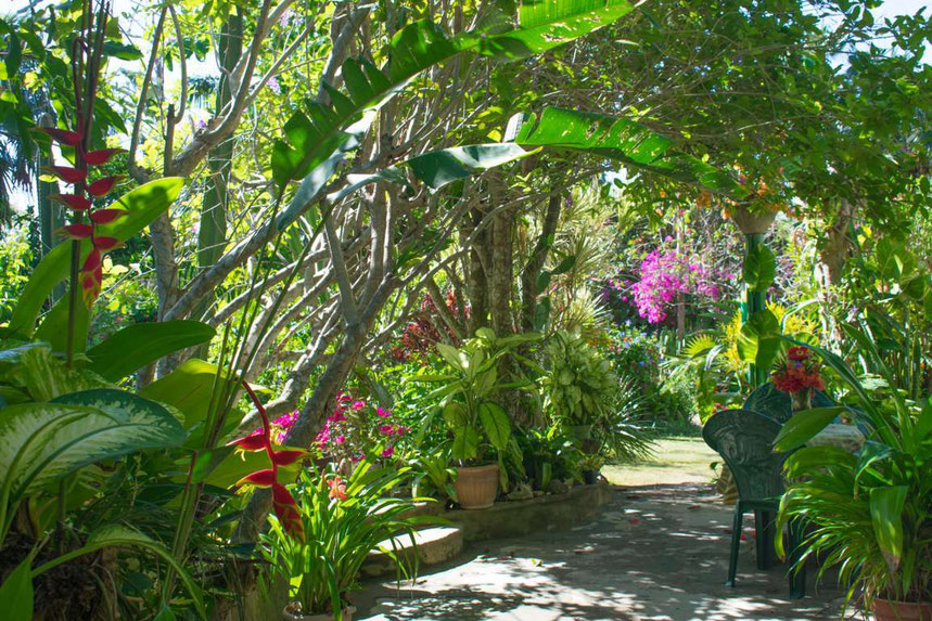 Shady observation places in Barney's Flower&Hummingbird Garden Jamaica