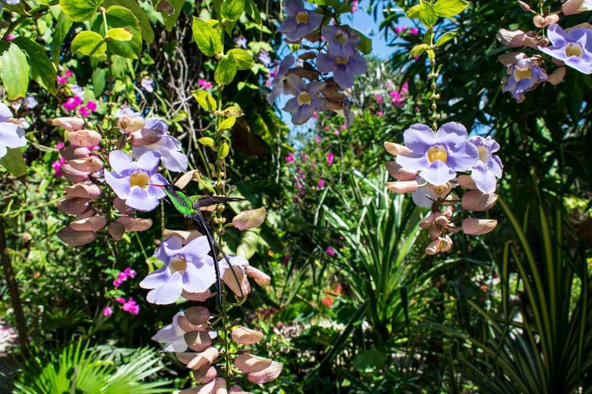 Hummingbird's favorite flowers in Barney's Flower&Hummingbird Garden Jamaica