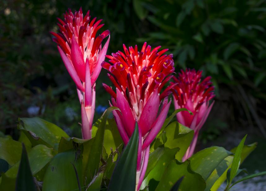Flower show in Barney's Hummingbird Garden Jamaica