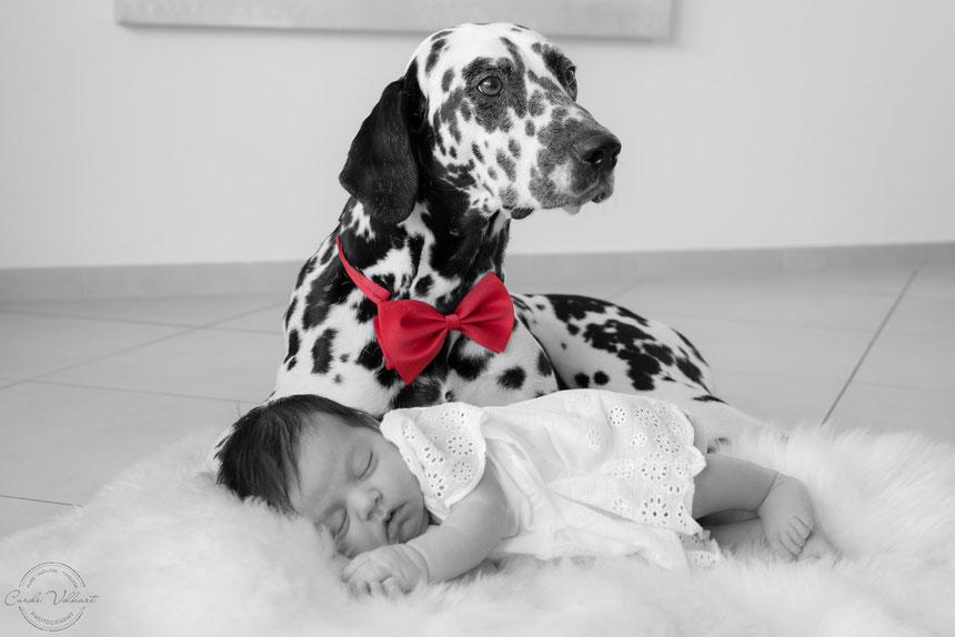Neugeborenenfotografie, Babyfotografie, Babyfotos, Zuhause, Newbornshooting, Newbornfotografie, Babyshooting, Babyfotograf, Newbornfotograf, Baby Fotoshooting, Homestory, Homeshooting, Hundeshooting, Dalmatiner