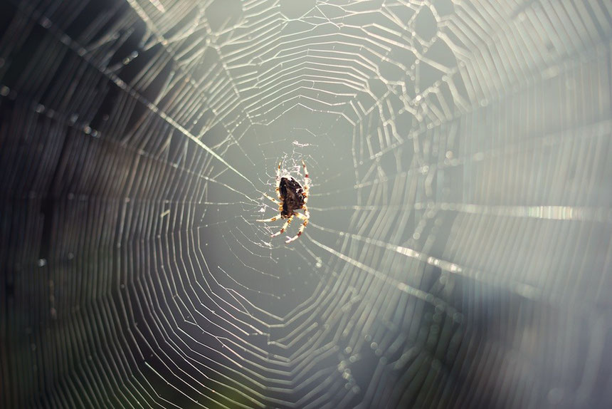 The strength of a spiders web is incredible, this stretches across our yard.