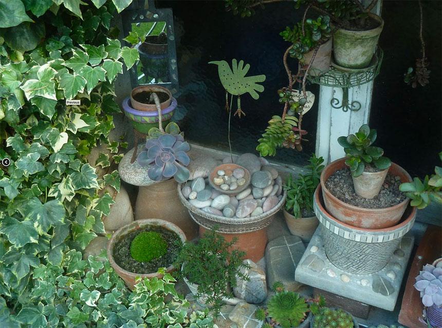 Succulentes dans le jardin de Cécile Bouvarel à Saint-Sauveur-le-Vicomte