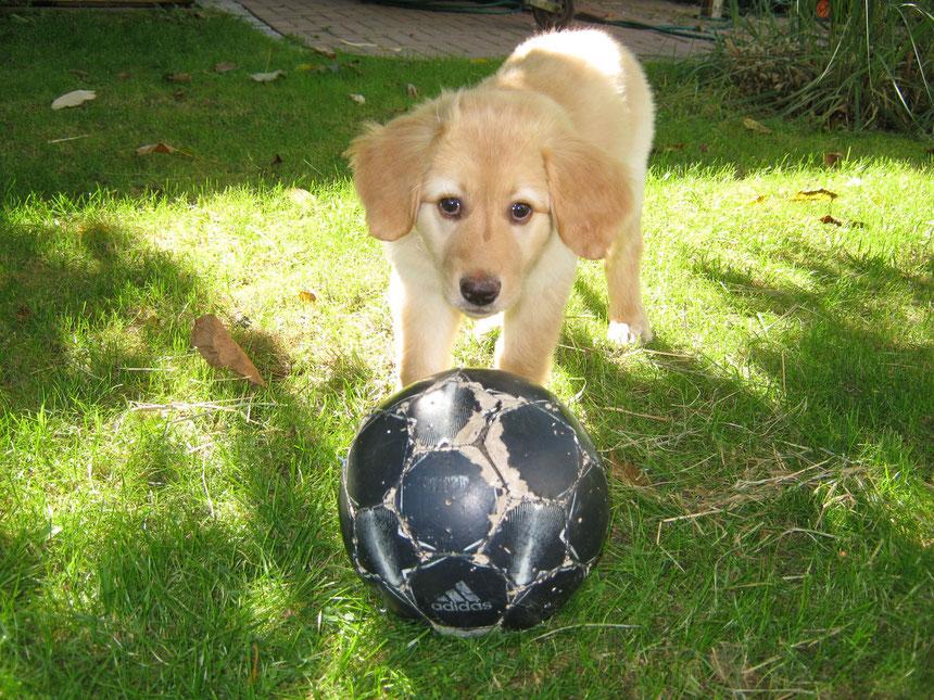Bellis mit einem alten Fußball
