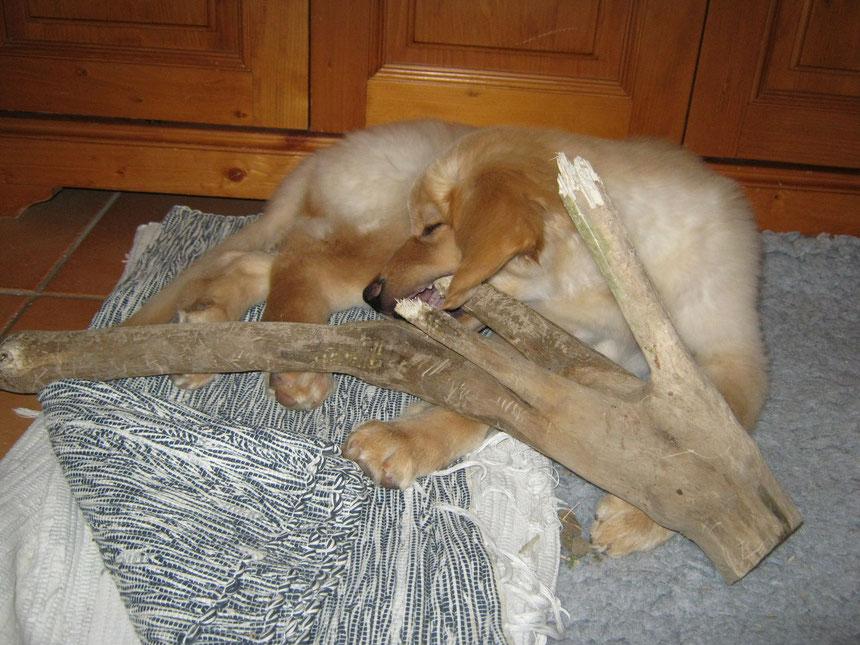 Den Stock hat Bellis - wie viele andere auch - beim Spazierengehen gefunden und ich habe ihn dann mitgenommen.