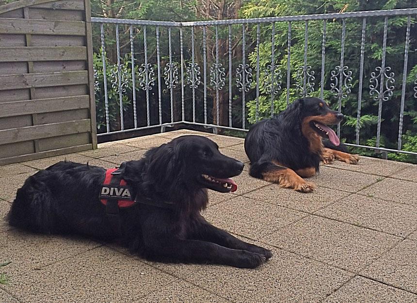 Besuch von Diva