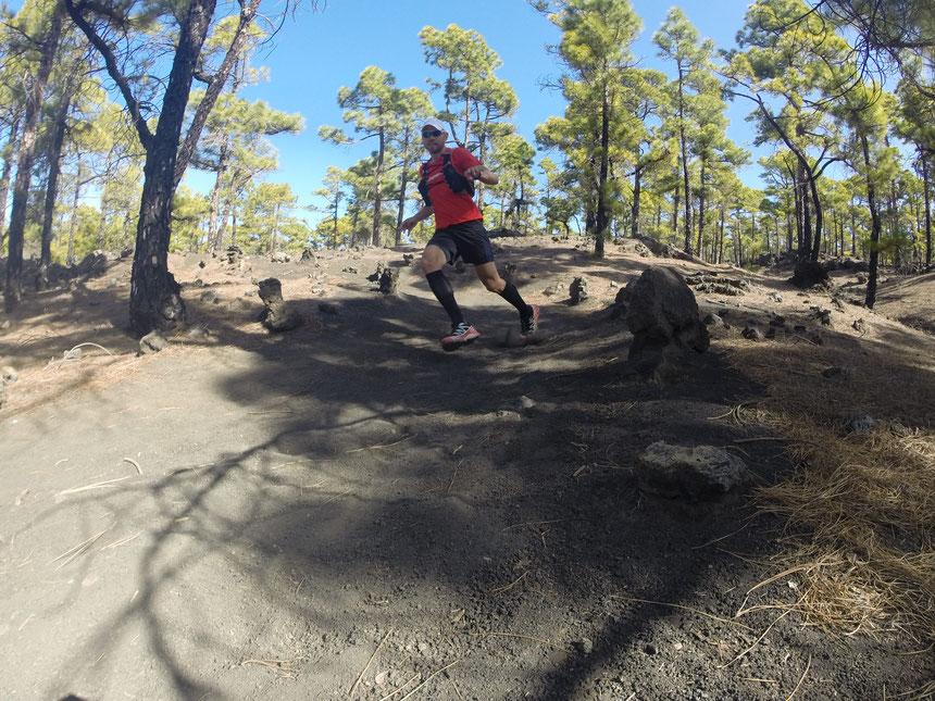 Waldabschnitt zwischen Los Canarios und El Pilar