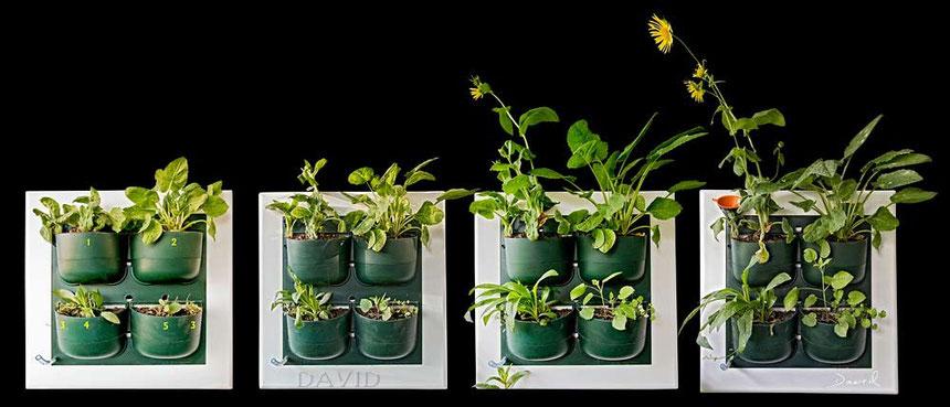 Flowall vertikale Gärten Wandbegrünung