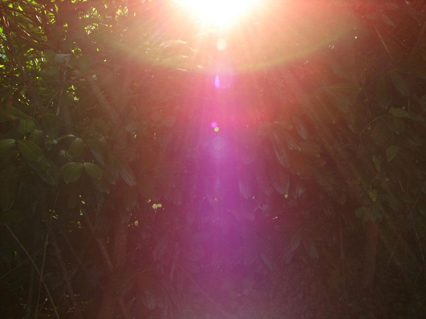 Ich bin....der Engel der freundlichen Gesten...Quelle: www.lichtwesenfotografie.com