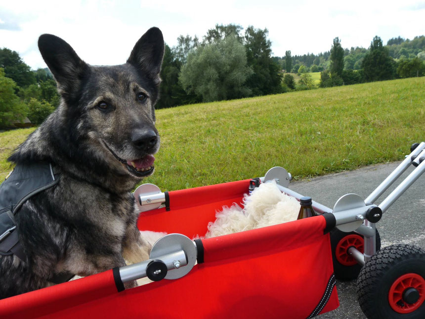 ulfBo - Hilfsmittel für Hunde - von Herrchen empfohlen