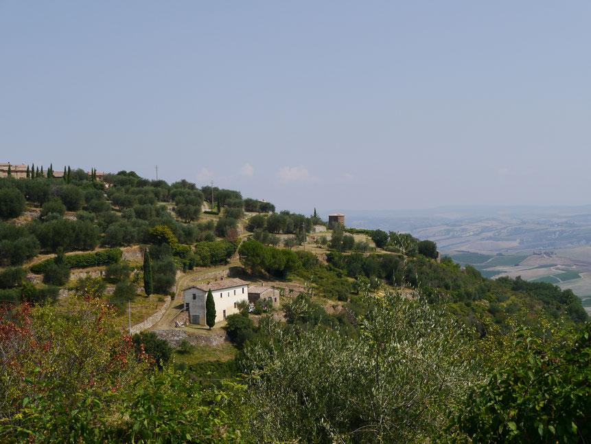 Der Hügel des Womo-Stellplatzes mit einem ersten kleinen Blick auf den Ortsrand von Montalcino und einem herrlichen Blick ins Land