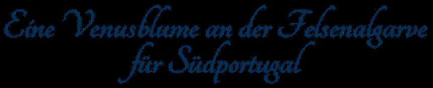 Eine Venusblume an der Felsenalgarve für Südportugal