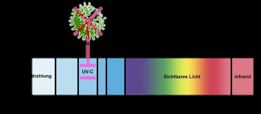 Darstellung der keimtötenden Wirkungsweise von UV-C Strahlung / Wirkung auch gegen Bakterien oder Viren wie den SARS-CoV-2 Virus