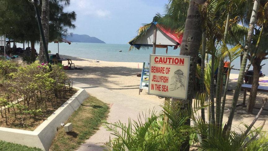 Warnung vor dem Jellyfish, der Würfelqualle