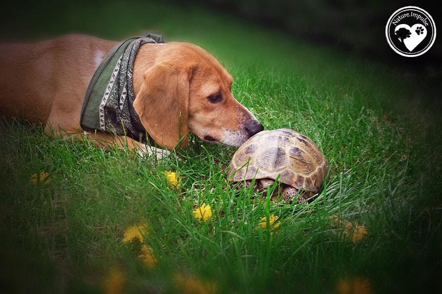 Nature.Impulse - Korny mit einer Schildkröte