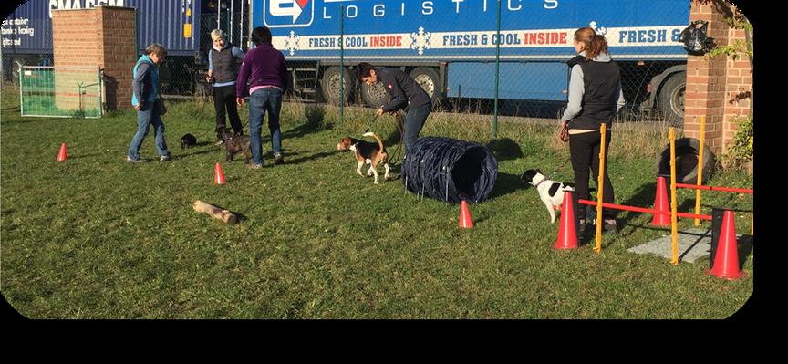 Hundetrainer Hundeschule Thomas Scherf 99610 Sömmerda Basic-Kurs Training