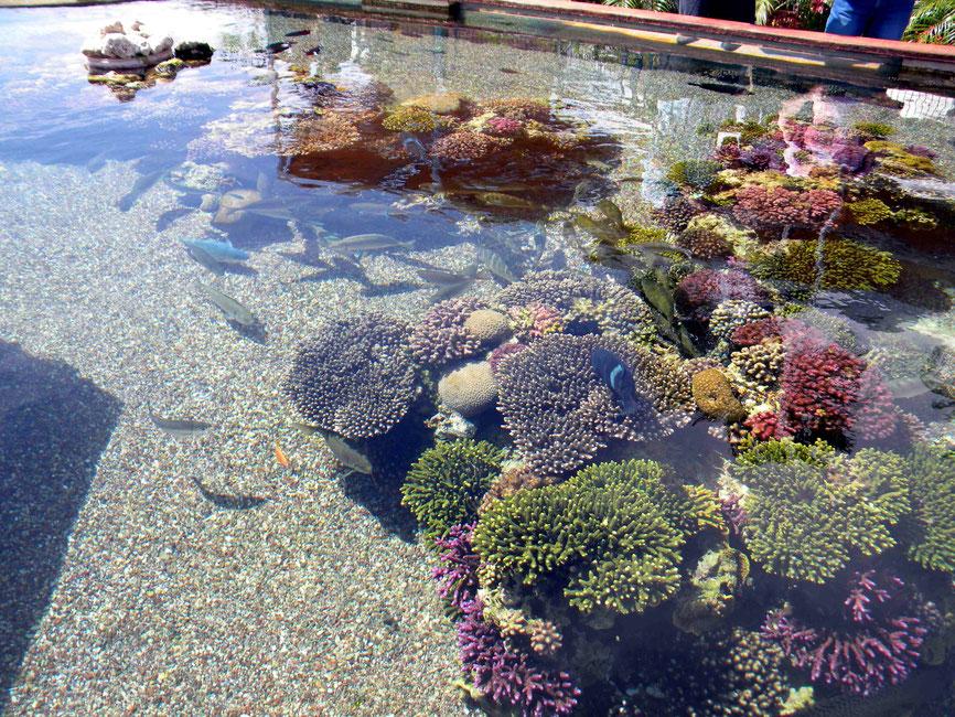Becken mit Korallen und vielen bunten Fischen