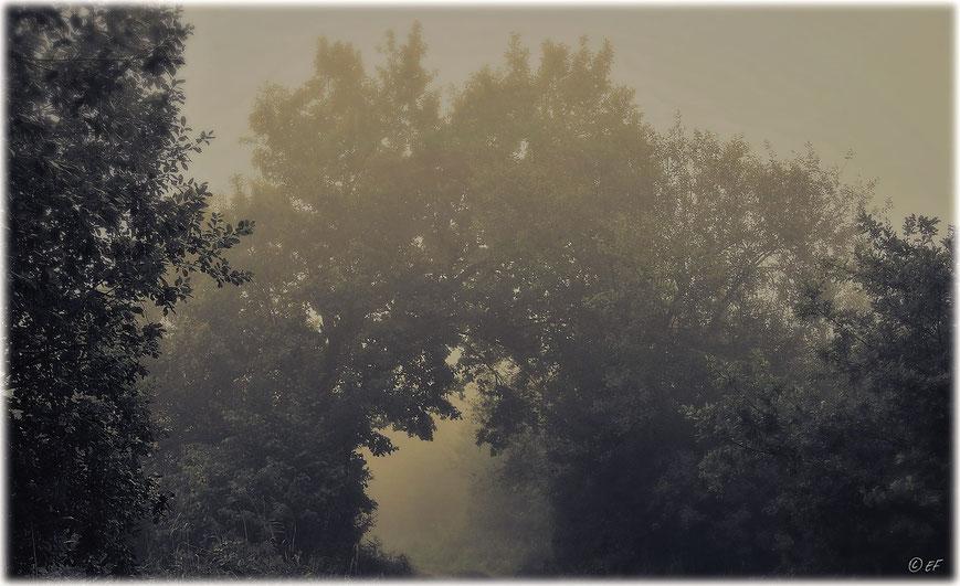 Es wird langsam Herbst: Das Nebeltor