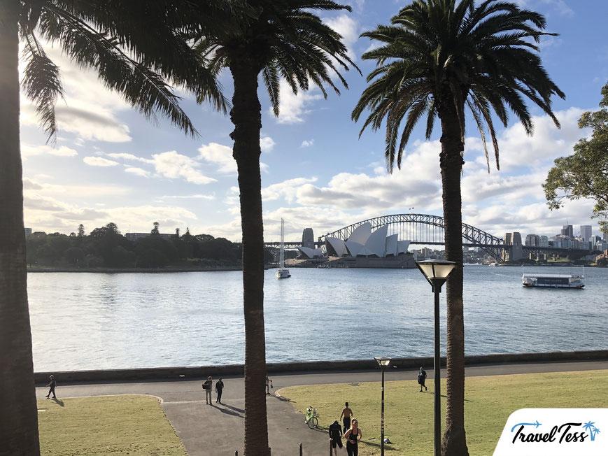 Palmbomen Sydney