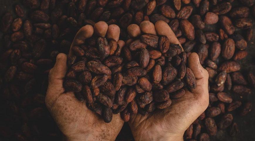 Cacao Meditation, Raw Cacao, Cacao Ceremony, Cacao Beans, Ceremonial Cacao from Bali, Peru & Bolivia