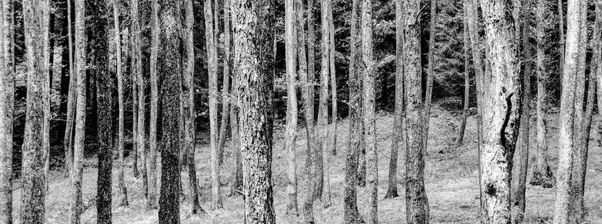 Wald schwarz-weiß