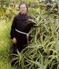"""Le Père Zago partage les secrets de l'aloe arborescens, et de la préparation  """"qui peut guérir du cancer"""" et qui d'après ses recherches est """"d' une grande efficacité"""""""