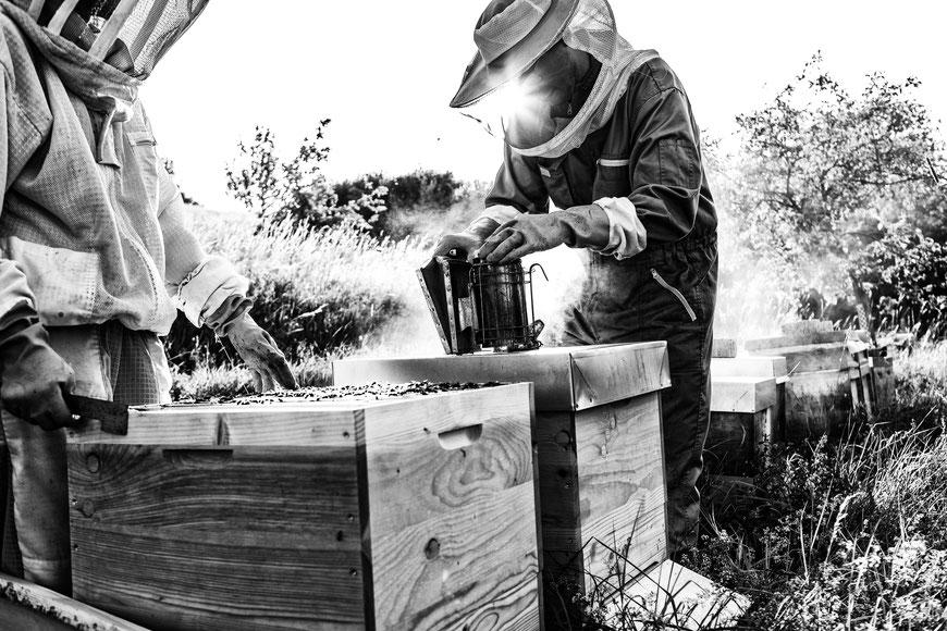 Zwei Imker der Bioland Imkerei Taununsbiene arbeiten an einem regionalen Bienenvolk in idyllischer Atmosphäre