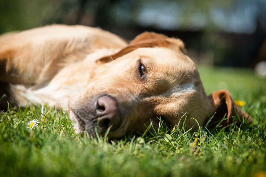 entspanntes Fotoshooting mit einem Hund in der Sonne
