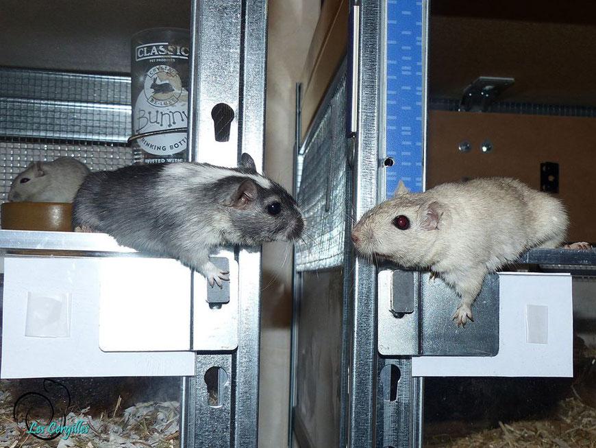 Giuliana & Winter se reniflent depuis leurs habitats respectifs...