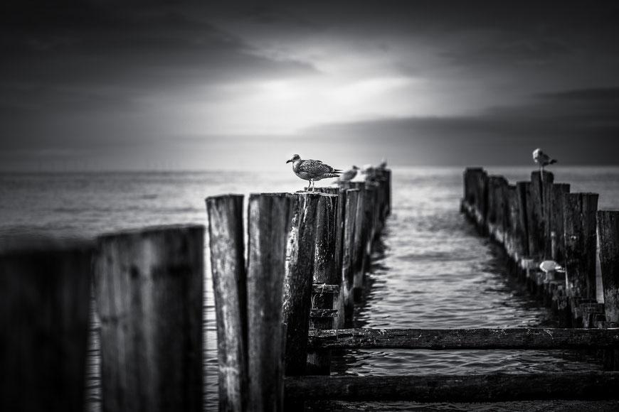 Buhnen in Zingst auf der Halbinsel Fischland-Darß-Zingst an der Ostseeküste zwischen Rostock und Stralsund, Schwarz-Weiß Fotografie, Schwarzweißfotografie, schwarz-weiß, schwarzweiss, monochrom