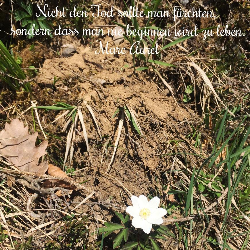 Ganzheitliche Psychosoziale Beratung Sara Vercellone - Blog Memento mori: Leben kommt und Leben geht