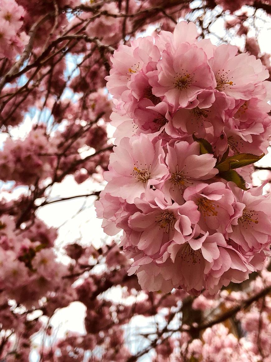 Ganzheitliche Psychosoziale Beratung Sara Vercellone - Blog Frühlingserwachen (Foto von Dany Kälin)