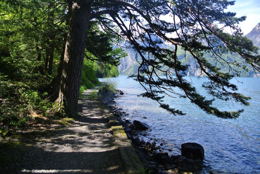 Wellen am Weg der Schweiz, zwischen Sisikon und Flüelen UR