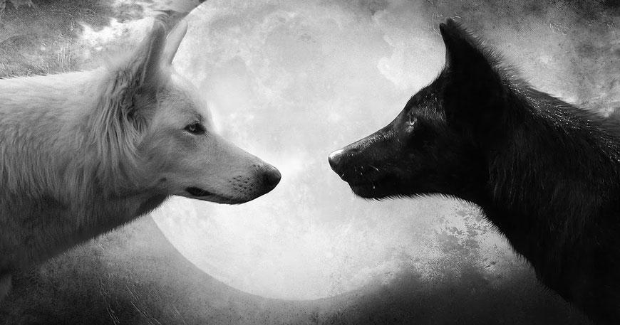 Der Kampf der zwei Wölfe in uns. Es gewinnt der, den du fütterst.