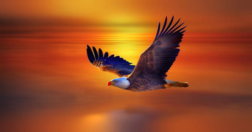 Der Adler, König der Lüfte