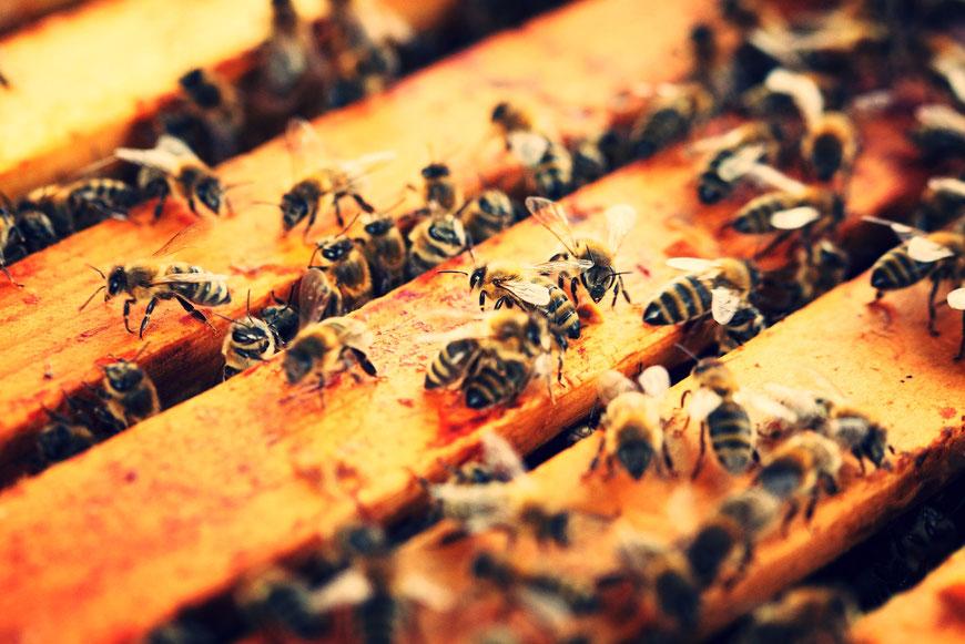 Bio-Bienenvolk