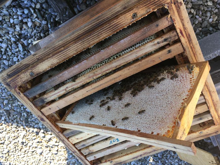 Bio-Honig in der Wabe