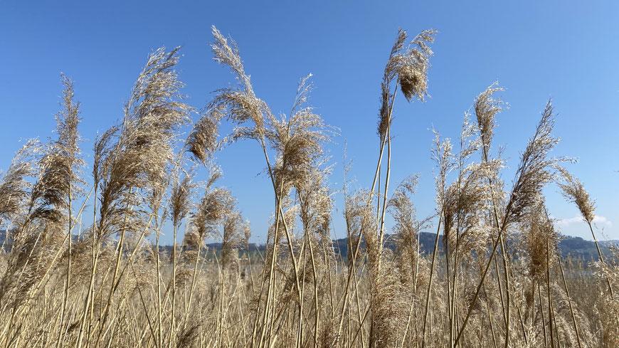 starker Wind, Luft, Lüften der Wohnräume, Tipps zum Lüften, Energiefluss, Feng Shui, Lichtblick, Klarheit, Lebensenergie Qi