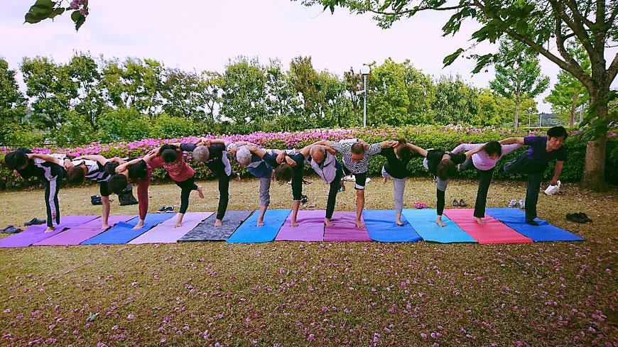 八重桜のじゅうたん  那珂市