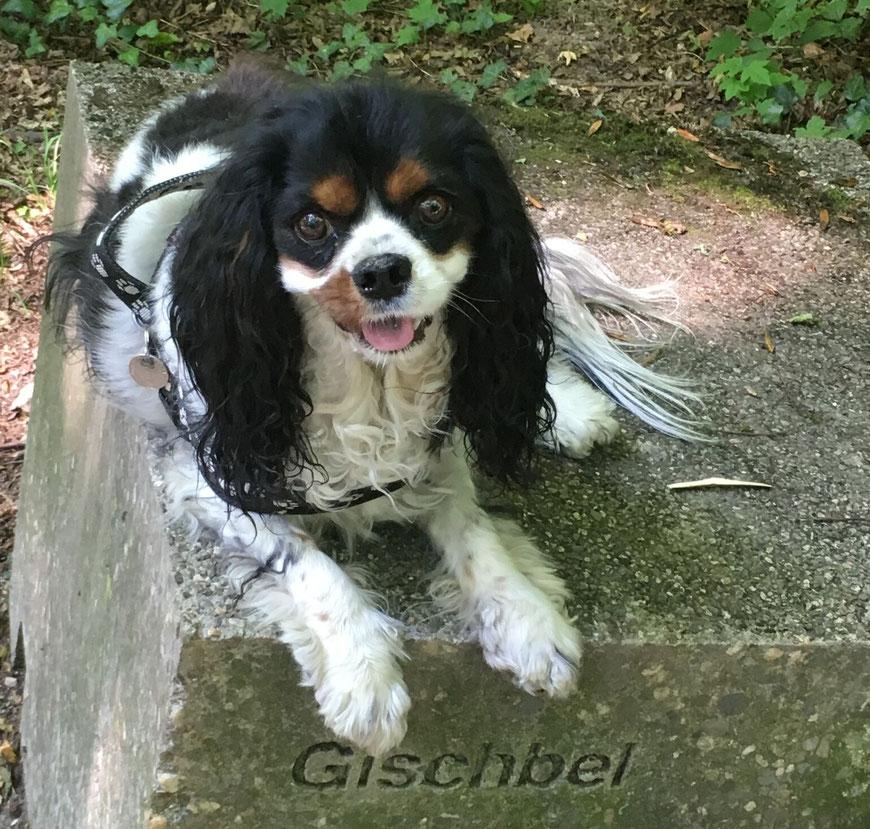 Gischbel*