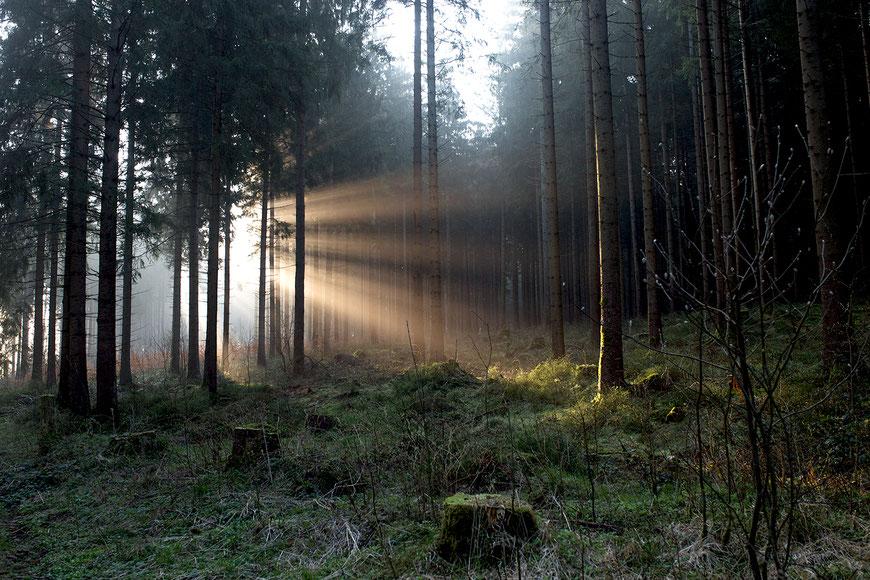 Sonnenaufgang im Harz Nationalpark. Anfang April muss man dafür gar nicht so früh aufstehen. (c) Salomé Weber